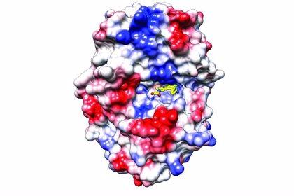Hallados nuevos compuestos que podrían usarse para tratar desórdenes autoinmunes