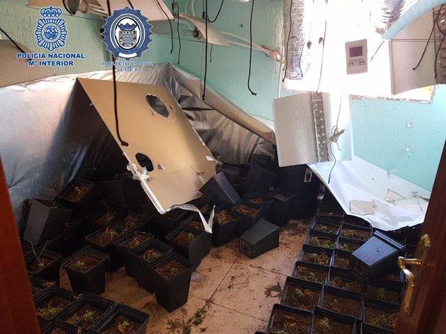 Nota De Prensa: Jerez Policía Nacional Y Policía Local Descubren Una Plantación De Marihuana En El Interior De Un Piso Incendiado