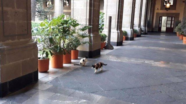 #Conlosgatosno, Los Mexicanos Se Vuelcan Por Los Felinos Que Habitan En El Palacio Nacional
