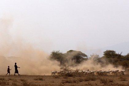 El pastoreo, fuente de producción de alimentos más antigua en África