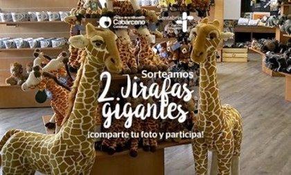 El Parque de Cabárceno convoca un concurso en el que puede ganar una jirafa gigante de peluche