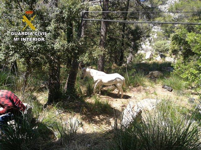 La Guàrdia Civil localitza un cavall que es trobava atrapat en el torrent donis Horts