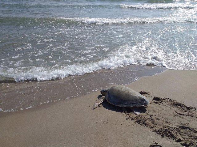 Rescaten a més de 150 animals encallats en passatges naturals a Catalunya