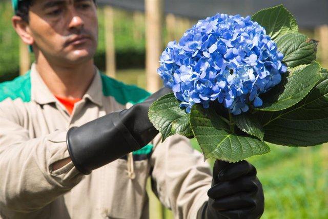 Colombia.- La flores colombianas dan una salida a los migrantes venezolanos