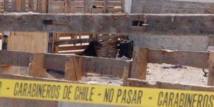 Muere un niño de tres años al ser atacado por dos perros en Chile