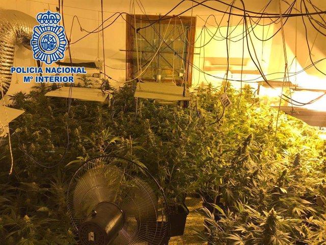 Almería.-Sucesos.-Detenidas dos personas tras la intervención de 239 plantas de marihuana en un cortijo de Almería