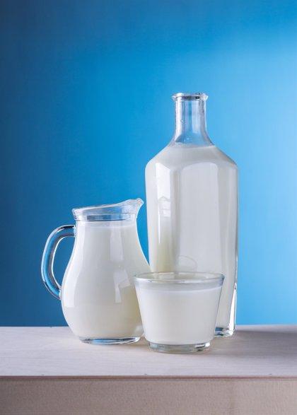 La ingesta adecuada de leche y productos lácteos ayuda a prevenir enfermedades crónicas