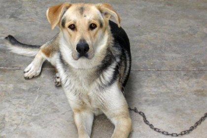 Merck lanza 'Novo-Helisen Depot', una vacuna para tratar la alergia a perros y caballos