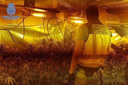 Detenidos en Talavera tres varones de una misma familia por cultivo de marihuana