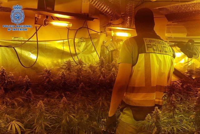 Sucesos.- Detenidos en Talavera tres varones de una misma familia de un grupo criminal dedicado al cultivo de marihuana