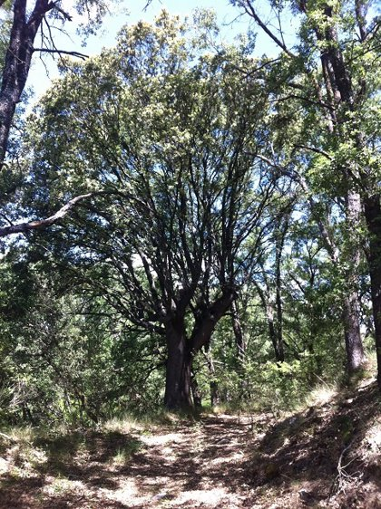 Manzanares acoge este miércoles el acto institucional con motivo del Día Mundial del Medio Ambiente