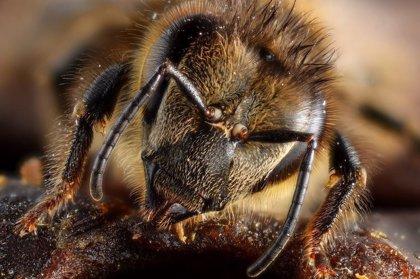 Las abejas son capaces de relacionar símbolos y números
