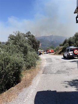 Córdoba.- Sucesos.- Efectivos del Infoca y bomberos de la Diputación intervienen en un incendio forestal en Adamuz