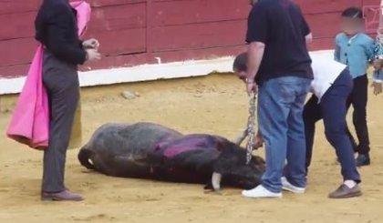 El Sindicato Veterinario Profesional de Asturias denuncia el maltrato animal en festejos taurinos