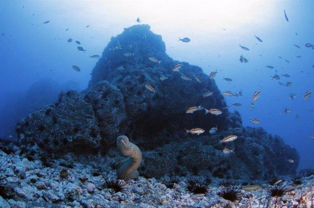 8 De Junio: Día Mundial De Los Océanos, ¿Cuál Es El Mayor Problema Que Enfrentan?