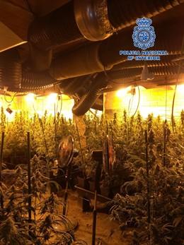 Sucesos.- Detenida en Escalona (Toledo) por cultivo ilegal de marihuana en una vivienda
