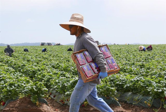Migrant Farm Workers in Northern Califòrnia