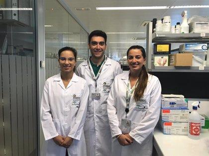 El Imibic de Córdoba descubre enfoques terapéuticos para tratar la pérdida de células renales en fracaso renal agudo