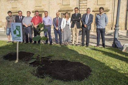 La Universidad de Sevilla planta una Plaulownia híbrida en jardines del Rectorado como compromiso con el medio ambiente