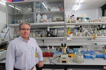 Un grupo de la UCO clasifica los genes de la fresa encargados de la defensa ante patógenos comunes