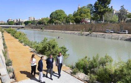 Las márgenes de 'Murcia Río' se llenan de vida con 6.000 plantas arbustivas y más de 200 nuevos árboles