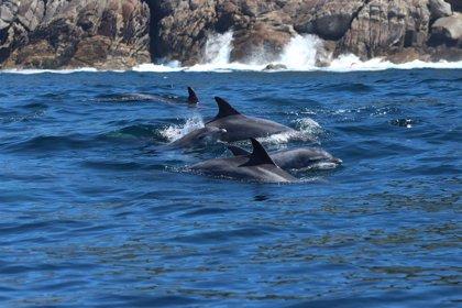 El proyecto TurGaSur crea un catálogo de arroaces gallegos a través de la revisión de más de 70.000 imágenes
