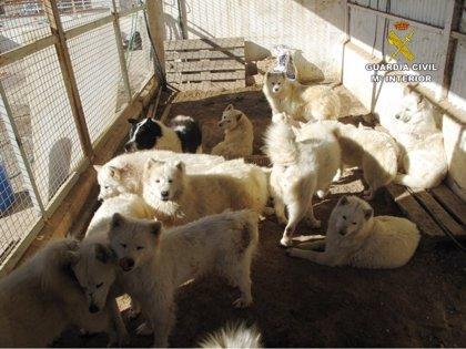 El Defensor pide un protocolo para infractores recurrentes en tenencia de mascotas que generan molestias a los vecinos