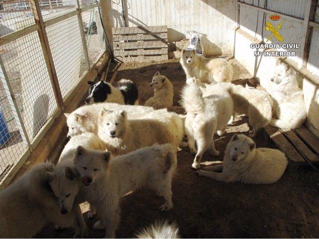 Investigados dos miembros de una asociación de animales por traficar con perros y maltratarlos