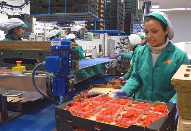 Huelva.- Economía.-Onubafruit, comercializadora de frutos rojos líder en Europa, finalista a los Premios Alas de Extenda