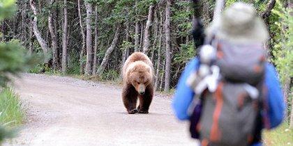 La Universidad de Oviedo colidera un estudio que recopila 664 ataques de oso pardo a seres humanos entre 2000 y 2015