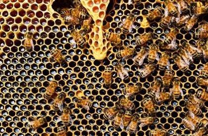Un estudio de la UEx aplica algoritmos basados en el comportamiento de las abejas para codificar mejor las proteínas
