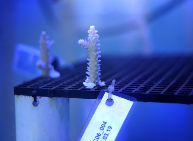 Iberostar inaugura un laboratorio de corales en República Dominicana para proteger la vida marina
