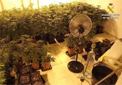 La Guardia Civil descubre una plantación de marihuana al acudir a una vivienda de La Nucia por un supuesto asalto