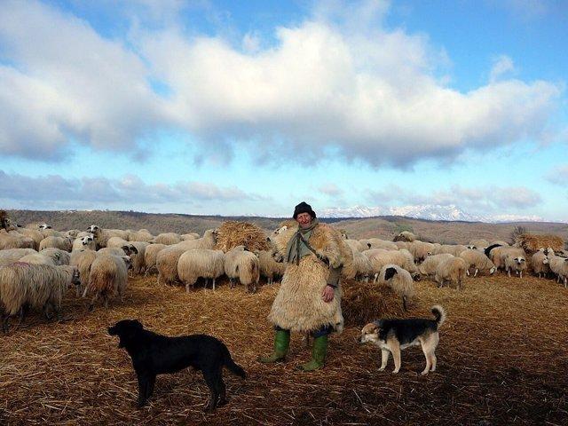Un estudio científico cuestiona la política de la UE en la prevención de daños causados por grandes carnívoros