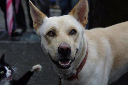 La Comunidad invierte 5.000 euros en una campaña de adopción de perros y gatos abandonados