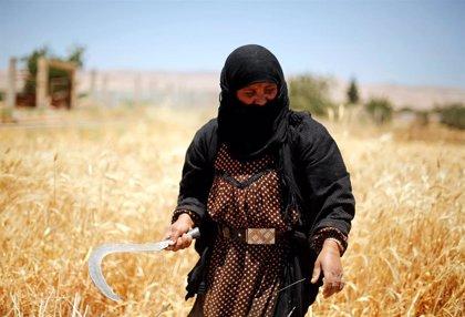 Las autoridades kurdas sirias impedirán la venta de trigo al territorio bajo control gubernamental