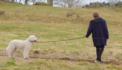 Tráiler final de Gösta, la serie sueca de HBO