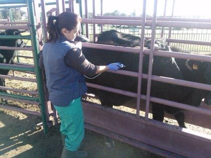 Andalucía comienza a distribuir 6,7 millones de dosis de vacunas para proteger al ganado frente a la lengua azul