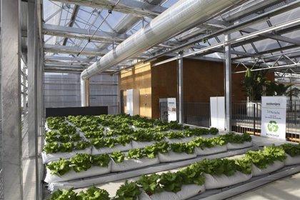 Un proyecto europeo ayudará a instalar invernaderos en azoteas de edificios