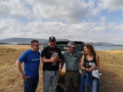 Nacen doce pollos de águila pescadora en la provincia de Cádiz con el proyecto de Endesa y la Fundación Migres