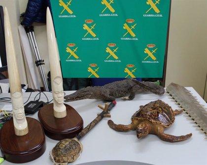 Guardia Civil investiga a 4 vecinos de Vigo por la venta ilegal de especies protegidas