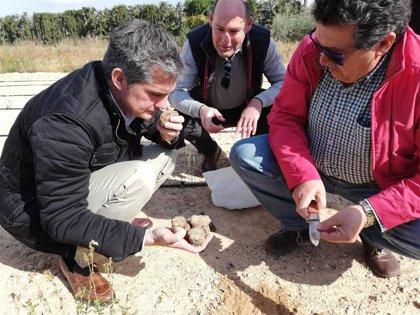 Agricultura amplía el estudio de la viabilidad del cultivo de la trufa del desierto al Valle del Guadalentín