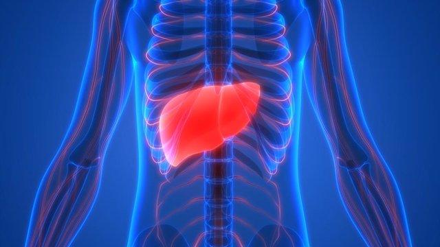 La dieta mediterránea y el ejercicio pueden revertir la esteatohepatitis no alcohólica