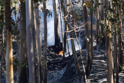 Ascienden a 92 los ayuntamientos con plan contra incendios forestales