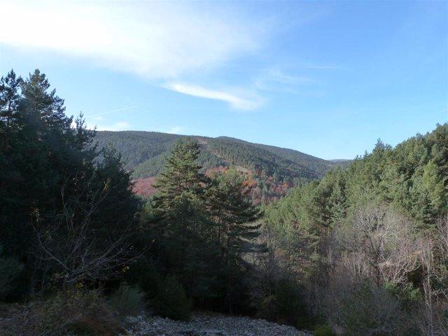El Parque Natural Sierra de Cebollera programa este sábado un paseo guiado por la Dehesa de Hayas del Astonar