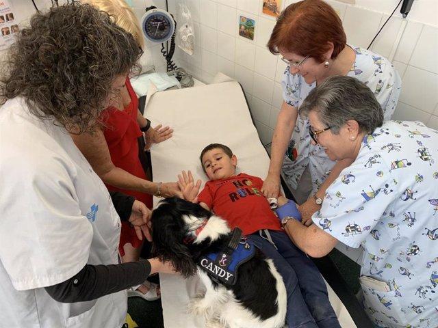 Un perro distrae a los niños en análisis y extracciones dentales en un CAP de Lleida
