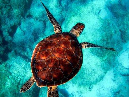 ¿Por qué el Día Mundial de las Tortugas Marinas se celebra el 16 de junio?
