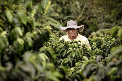 Nespresso ayudará a caficultores de Colombia a recuperar cultivos de café en riesgo