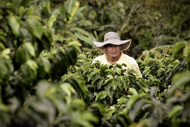 Nespresso ayudará a caficultores a recuperar cultivos de café en riesgo por guerras, crisis económicas o climáticas