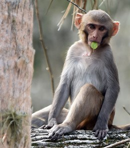Florida monkeys pose threat to humans